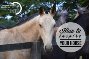 how-to-inspire-your-horse